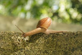 foto of hermaphrodite  - Snail crawling on the concrete  - JPG