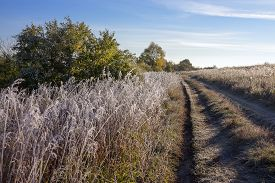 picture of novosibirsk  - The grass is covered with frost autumn morning - JPG