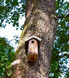 stock photo of safe haven  - Wooden birdhouse on the tree - JPG