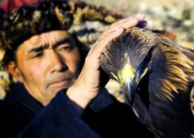 picture of mongolian  - Mongolian Man Trained Eagle Kazakh Olgei Western Concept - JPG