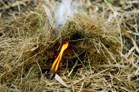 picture of dry grass  - Autumn dry grass close up - JPG