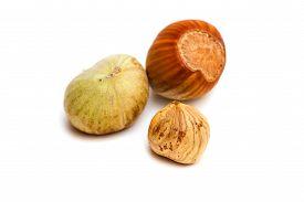 stock photo of cobnuts  - Hazelnut and kernel isolated on white background - JPG