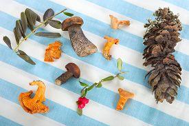 foto of chanterelle mushroom  - Red berries - JPG