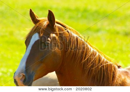 Horses002