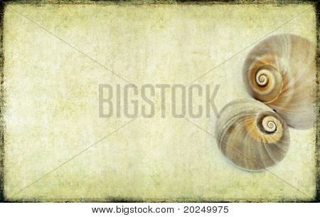 lovely background image with sea shells up close. useful design element.
