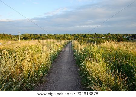 Sunlt footpath surrounded of lush vegatation in green and yellow colors