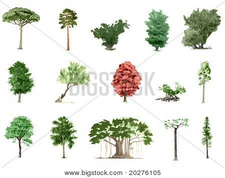 Painted color trees collection #5, isolated