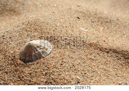 Limpet On A Golden Sandy Beach