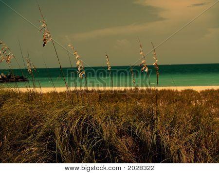 Yellow Grass At Sunset At Miami Beach