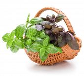 Sweet basil herb leaves bunch in wicker basket isolated on white background cutout poster
