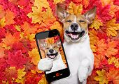 Autmn Fall Leaves Dog Selfie poster