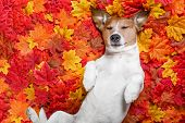 Autmn Fall Leaves Dog poster