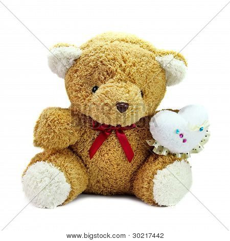 Bear on white background