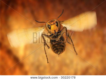 hornet attack