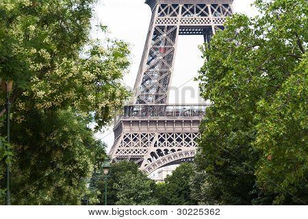 Eiffel Tower Glimpsed Through Green Trees