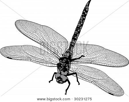 Vector Dragonfly Two