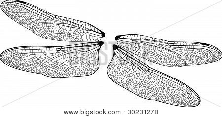 Vector Dragonfly Wings