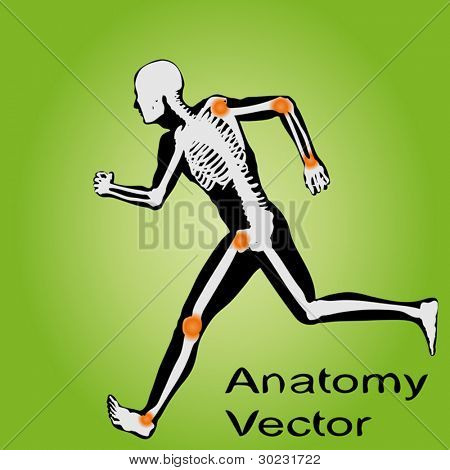 Vector concept or conceptual white and black man anatomy illustration on green background for medical,medicine,health,rheumatism,osteoporosis,muscle,ache,arthritis,inflammation,painful or bones design