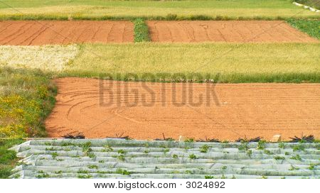 Maltese Fields
