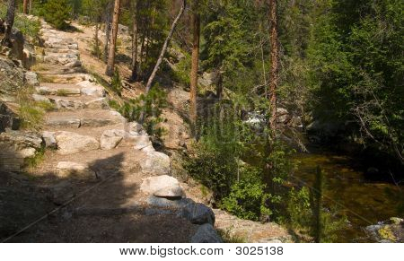 Forest Stair And River