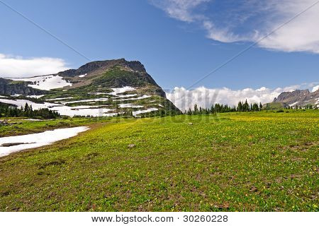 High Alpine Meadow In The Summer