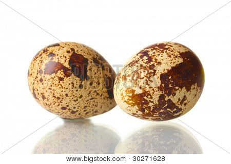 two quail eggs isilated on white