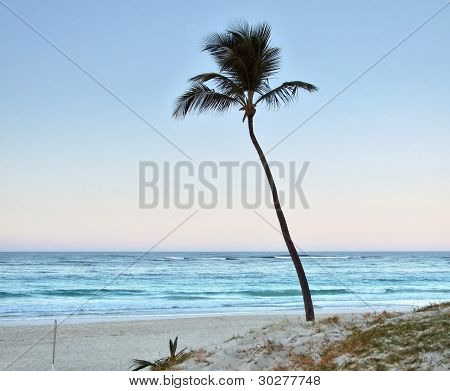 Palm Tree At Evening Time