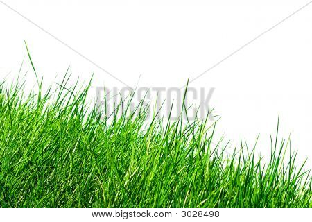 Grass Over White