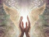 Sensing Angelic Energy - Male Hands Reaching Up Into A Beautiful Pair Of Golden Angel Wings With Whi poster