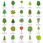 Tree Types Icons Set. Isometric Illustration Of 25 Tree Types Icons For Web poster