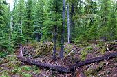 Meadow With Fallen Timber Logs Taken At An Alpine Forest On Mountainous Terrain In Rural Washington  poster