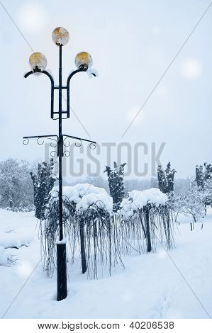 Lamp Beside Weeping Willow