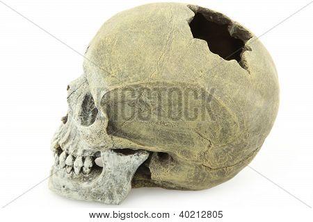 Model of Human Skull