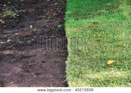 Green Sod Grass And Brown Earth