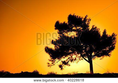 Single tree silhouette against sunrise