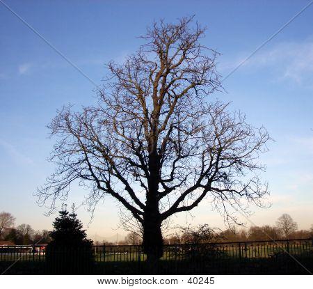 Tree And Sky 3