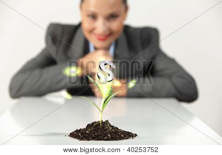 Money Sprouting - finance and money symbols sprouting from stems