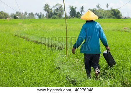 BALI - 15 DE FEVEREIRO. Fazendeiro trabalhando com chapéu amarelo em arrozais em 15 de fevereiro de 2012, em Bali, Ind