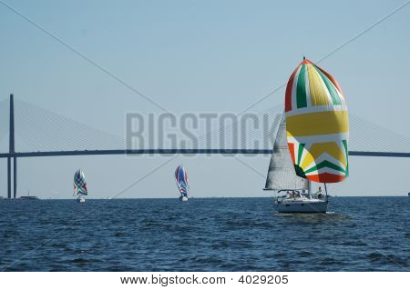 Yachts racing downwind in Tampa Bay Florida regatta.