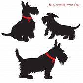 pic of scottish terrier  - Set of of scottish terrier dogs silhouettes - JPG