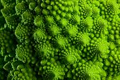 image of romanesco  - Romanesco broccoli cabbage marco - JPG