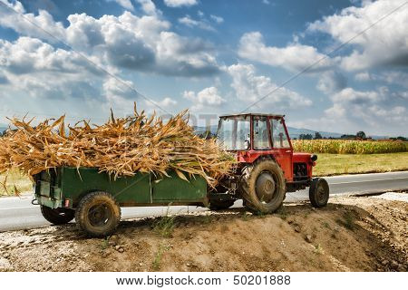 Tractor laden with dry stalks of corn - Autumn field works