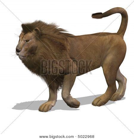 Big Cat Lion Male