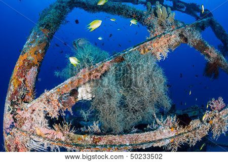 Fish Around The Superstructure of a Shipwreck