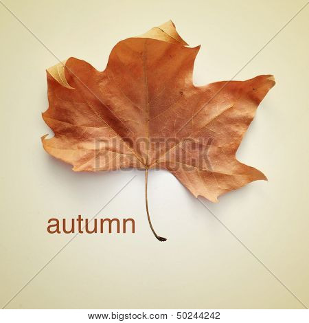picture of a dried leaf and the word autumn with a retro effect