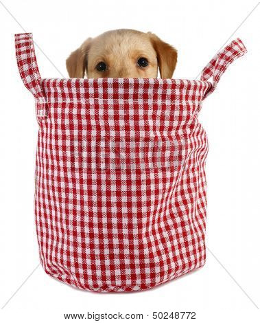 Little dog puppy is peeping from plaid basket