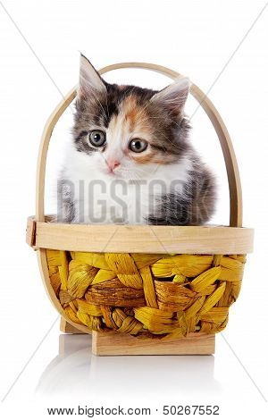 Kitten In A Wattled Basket.