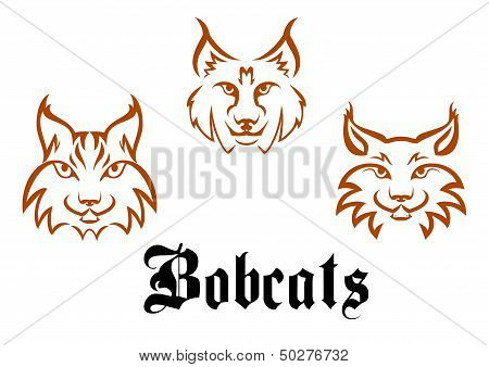Bobcats and lynxs