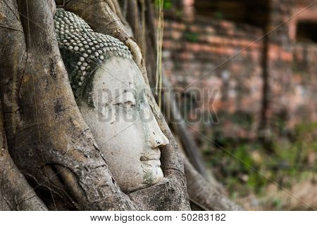 Buddha head entangled in fig tree roots in Ayutthaya, Thailand