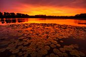picture of kansas  - A horizontal image of lilypads at Sunrise on a pond just outside of Kansas City Missouri - JPG